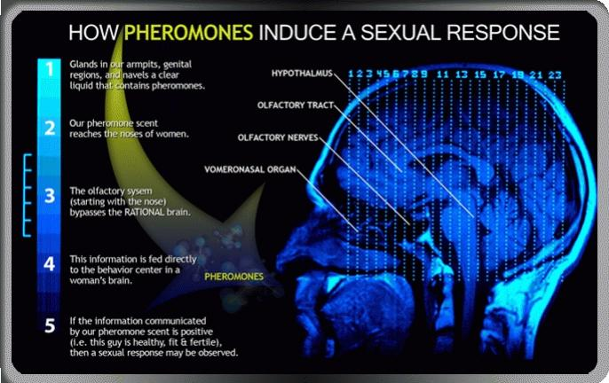 Parfum Pheromone Empowers Angela Pemikat Wanita Pria Feromon Tersedia 2